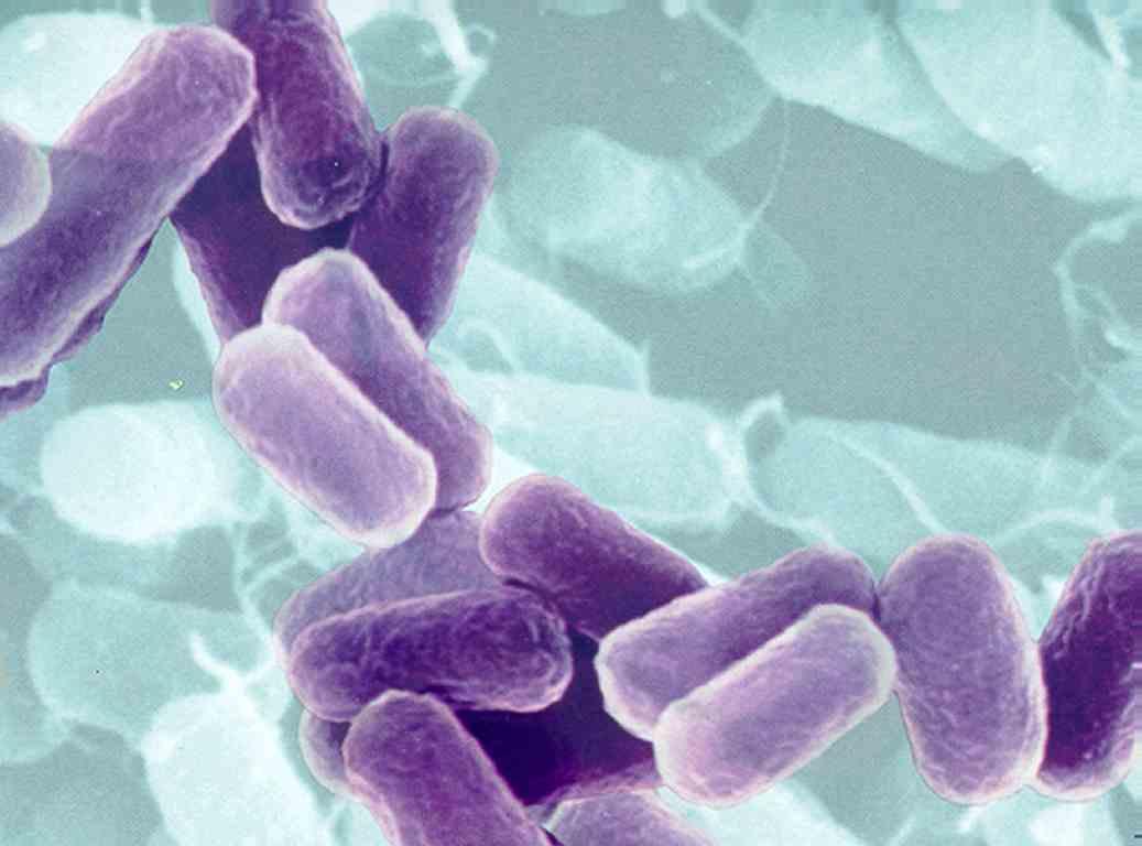 Image of microscopic bacteria